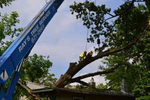Ray's Tree Service!