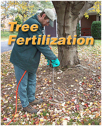 Tree Fert text