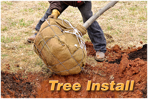 Tree Install text