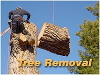 tree removal text2
