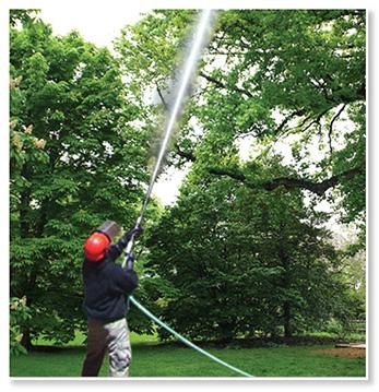 Spray your trees