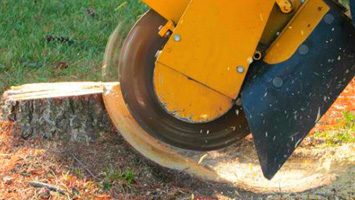 rays website service blocks - no words - stump grinding