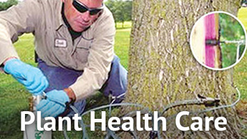 rays website service blocks - plant health care