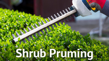 rays website service blocks - shrub pruning