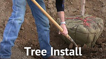 rays website service blocks - tree planting
