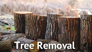 rays website service blocks- tree removal